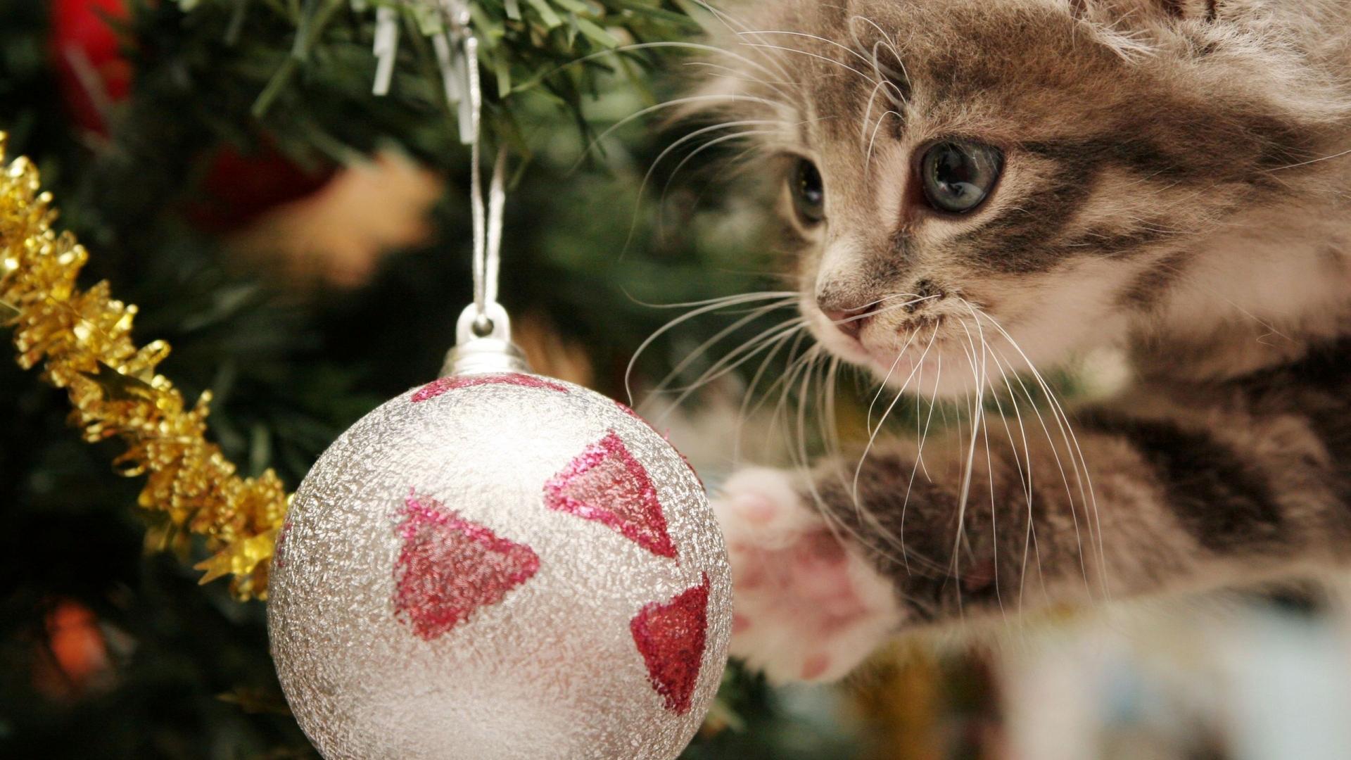 Christmas Wallpaper Cute Kitten