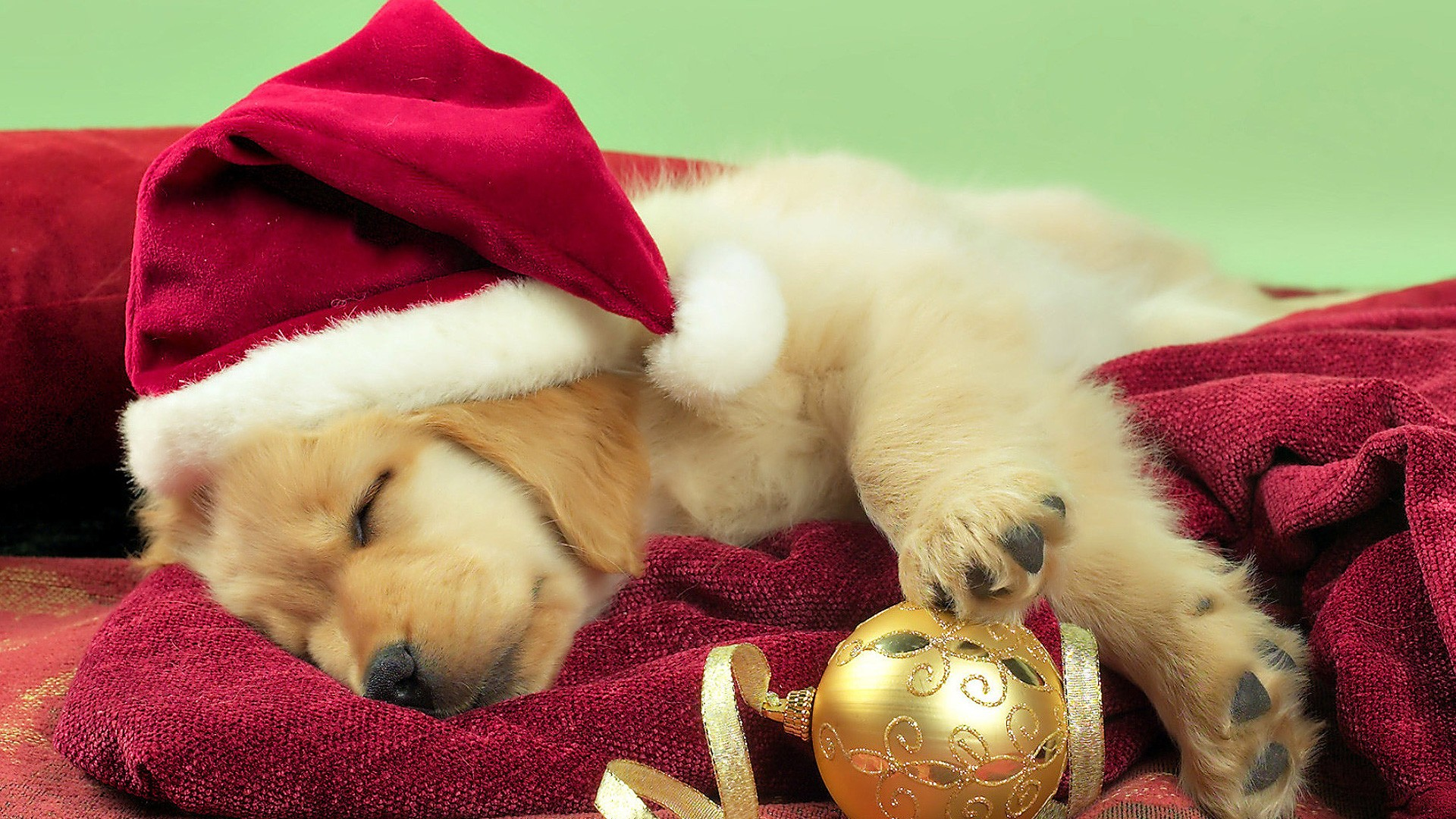 Christmas Wallpaper Dog